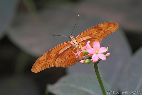 Schmetterling 13 by hellboy2503