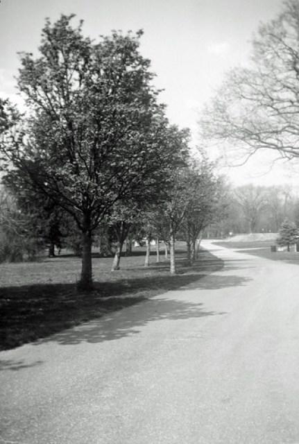 Holliday Park Path