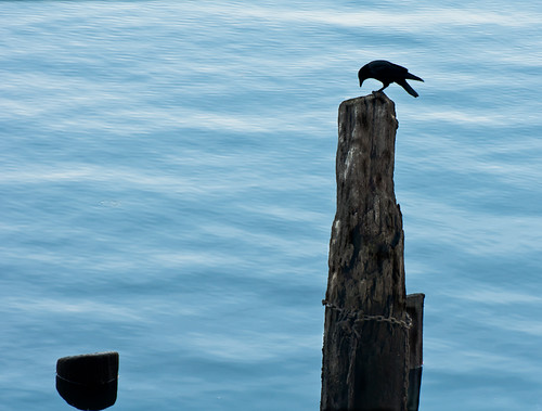 Crow Waterfront Sentinel