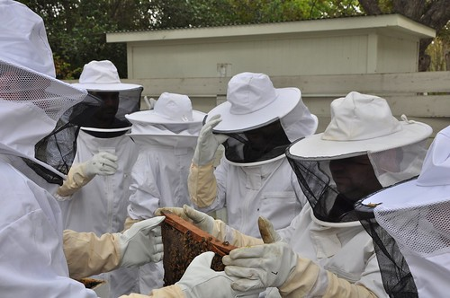 Students with bees 9