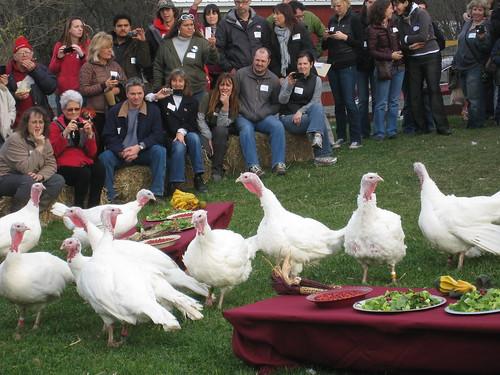 Celebration for the Turkeys