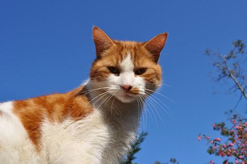 cats 015