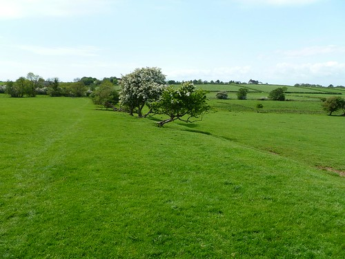 The line of the curtain wall marked by hawthorn trees