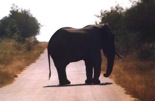 elefante g