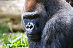 The 800lb Gorilla in the Room