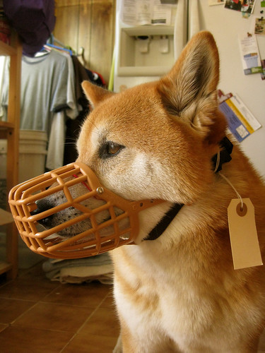 Basket muzzle training