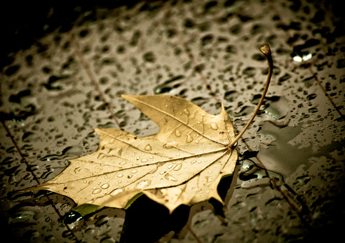 Windshield Leaf Gold