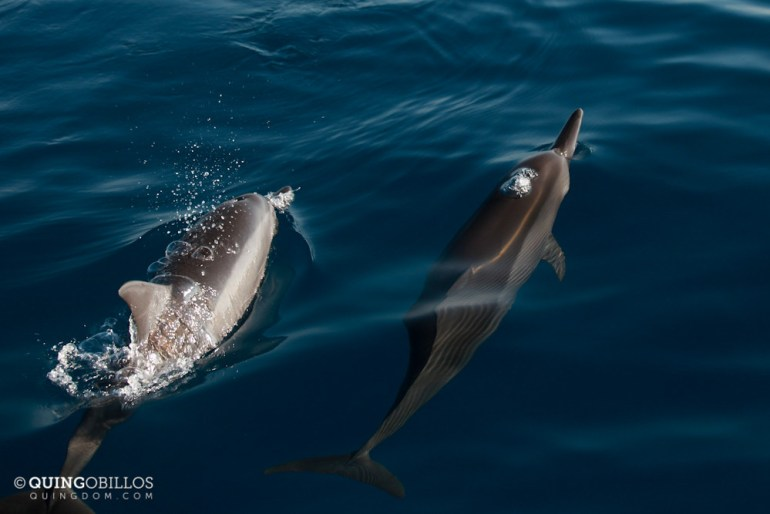 Go on a Puerto Princesa Dolphin Watching Tour