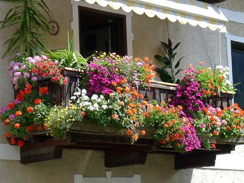 Febbraio si avvicina: inizia a immaginare il tuo terrazzo fiorito ...