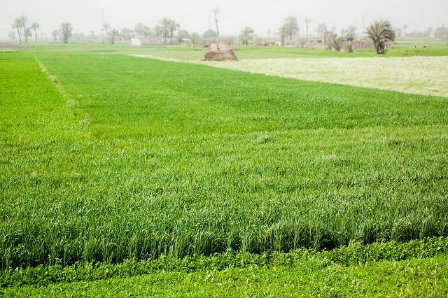 Farmlands along the Nile