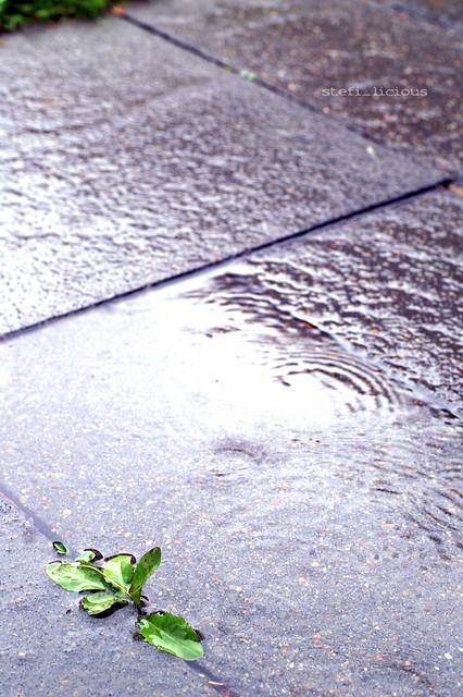 regen_pflaster