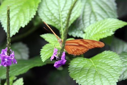 orange butterfly, niagara falls, ontario Canada