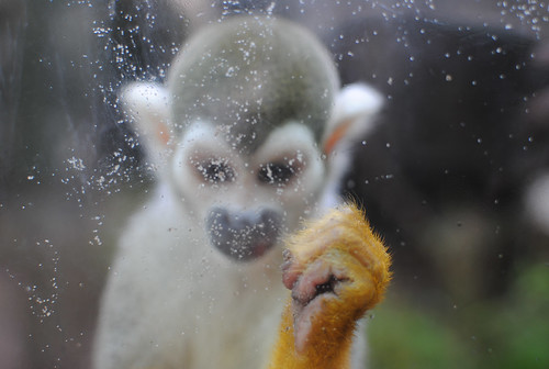 monkey behind glass