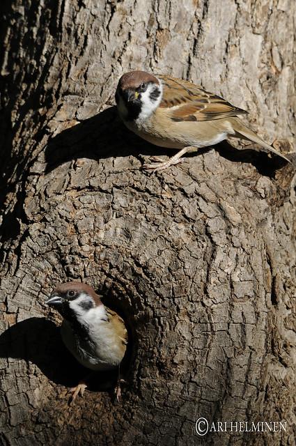 Birdy couple