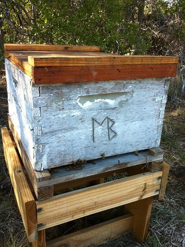 Branded hive at Deadman Creek
