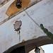 Masseria Altemura - Torre Santa Susanna (BR)