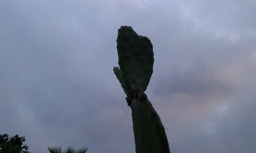 Heart Shaped Cactus Paddle