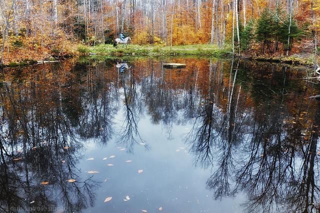 Scène d'automne