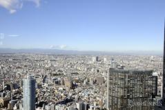 On top of Shinjuku