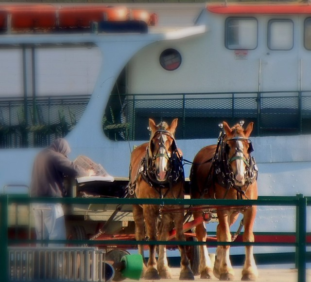 Horses on the dock