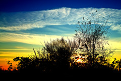 Feathers in The Evening Sky