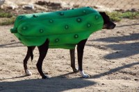 This dog is in a pickle! Dog Halloween Costume Pic Of The Day