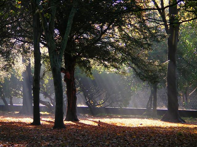 Bute Park in Autumn