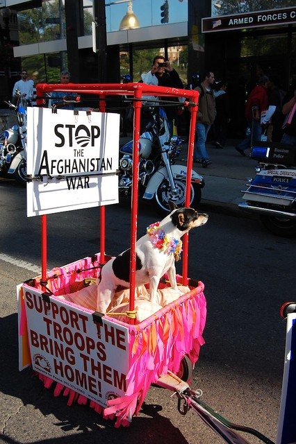 Stop the Afghanistan War Puppy