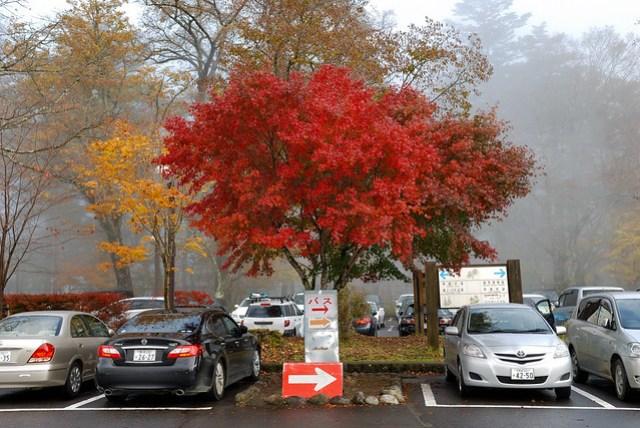 停車場也有紅葉,圍繞在迷霧中