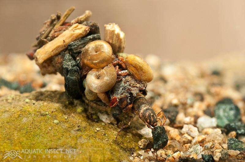 5979621400 2ec7cede84 b Natures 3D Printers: Using Honeybees to Create Art
