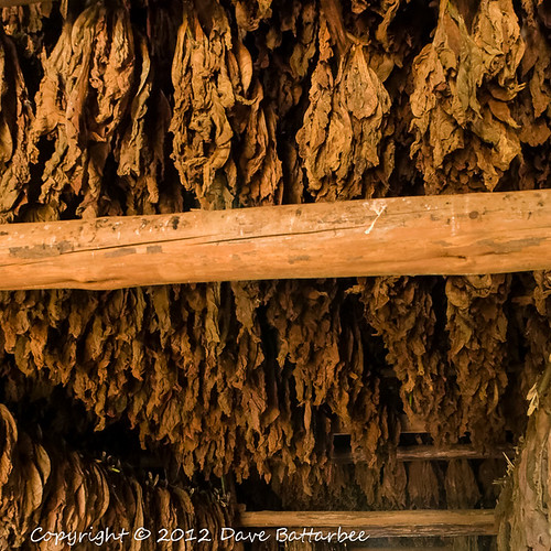Tobacco Drying Shed