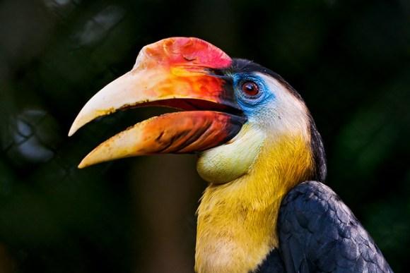 Colorful hornbill