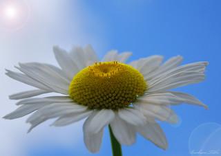 """""""Praise is like Sunlight. . .""""  (Explored)"""