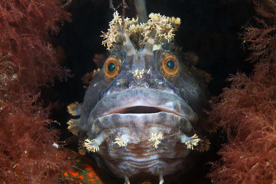 Biodiversidade marinha, para parecermos insignificantes  (2/6)
