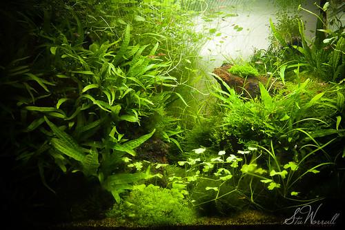 90x45x45cm planted tank