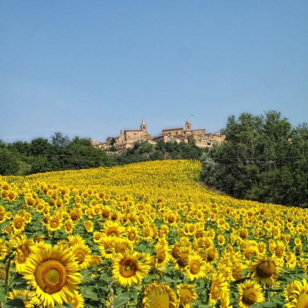 Montedinove Ascoli Piceno Italy Tripcarta