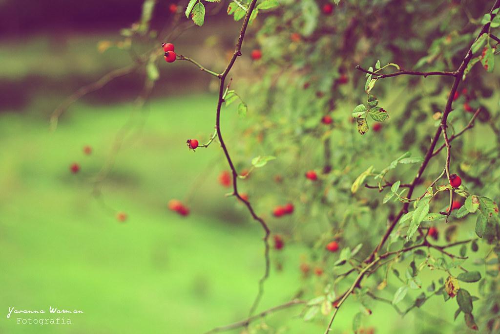 Nature. [Explore]