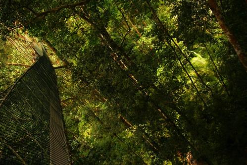 Canopy Walk into the jungle by Raffaella di Iorio Photography