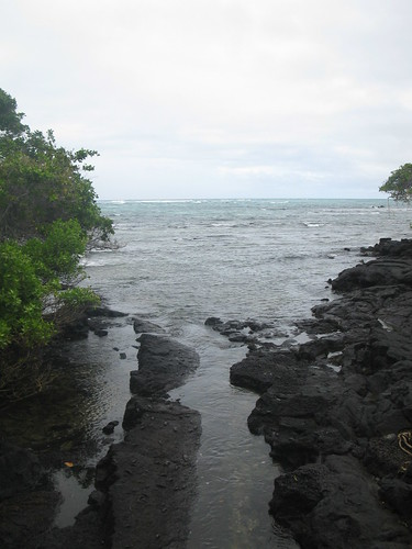 basalt, water, waves, and mangroves