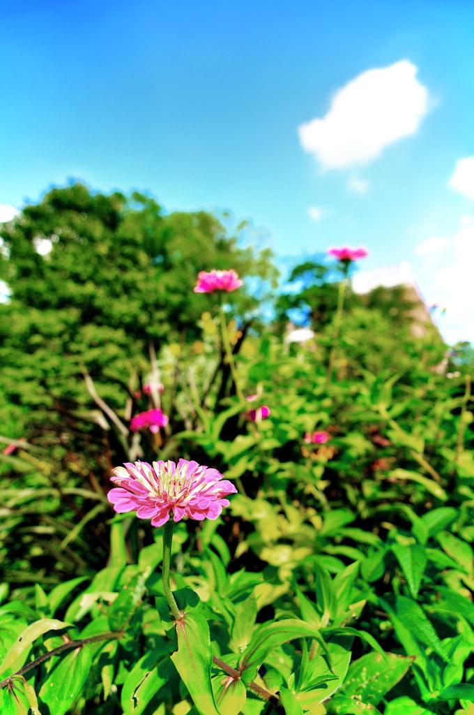 Conservatory Garden - Central Park