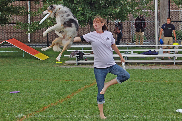Canine Stunt