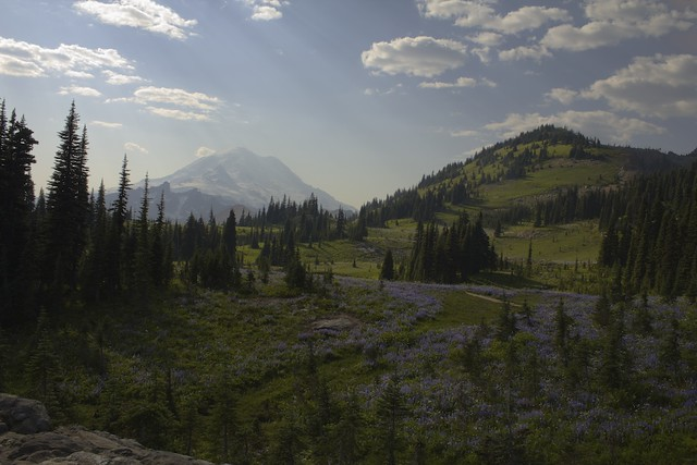Mt. Rainier Behind a Hilly Mountain Meadow
