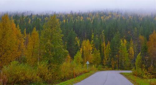 Ruska near Kätkätunturi in Lapland