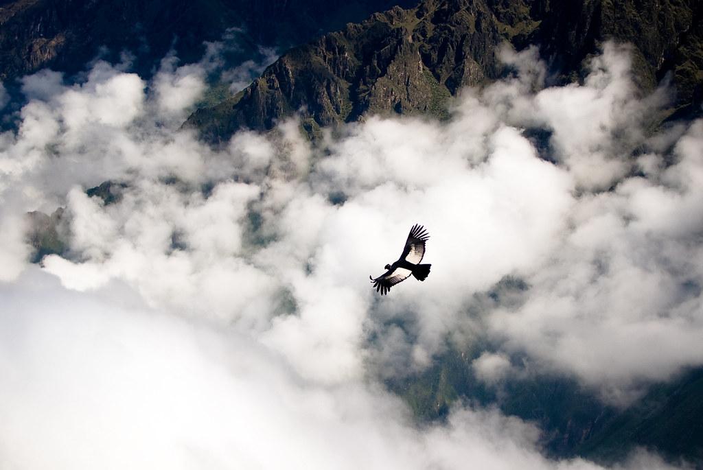 vol du Condor Royal