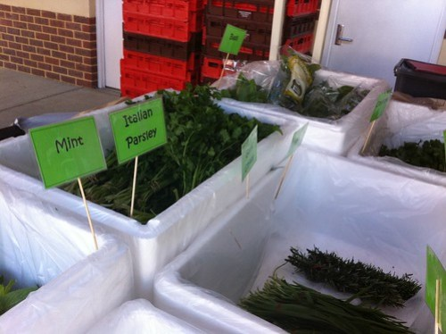Herbs on offer at the Subiaco Farmers Markets