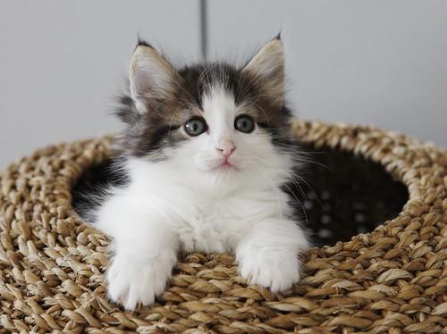 ... or a kitten in a basket