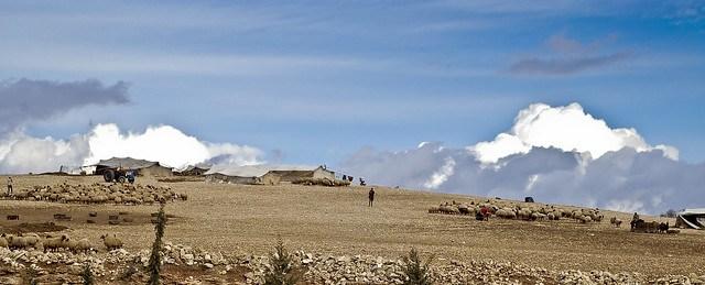 Shepherds' camp