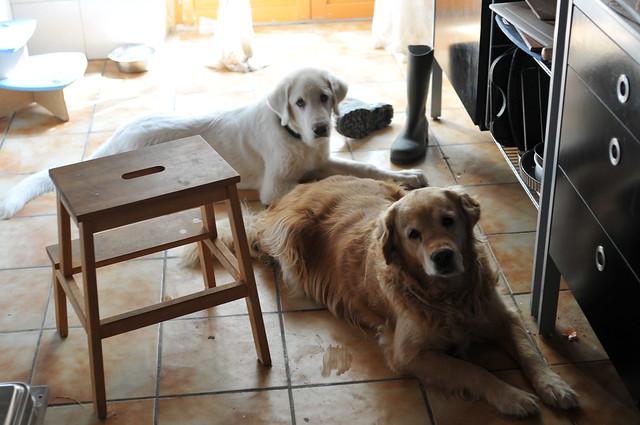 loyal hounds