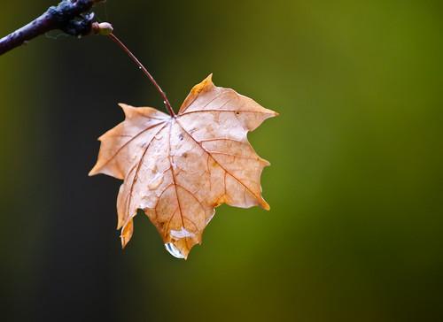 Leaf & Drop
