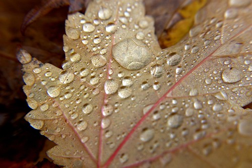 Autumn leaf with water droplets